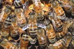 Swarm Tactics