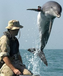 Dolphin with pistol strapped to your head? Your days may be numbered...